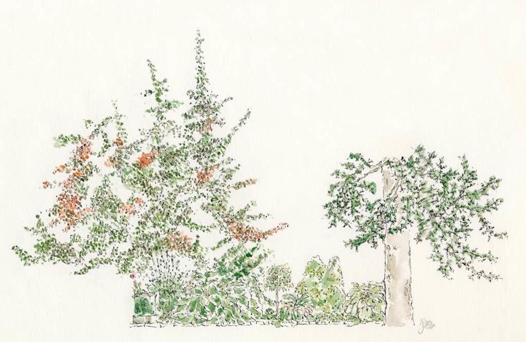 My parents garden