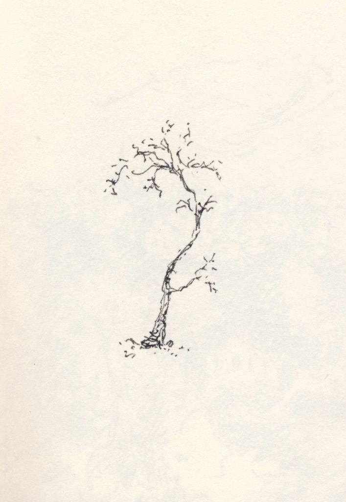 little inky tree • pen en inkt • gemaakt door JWH