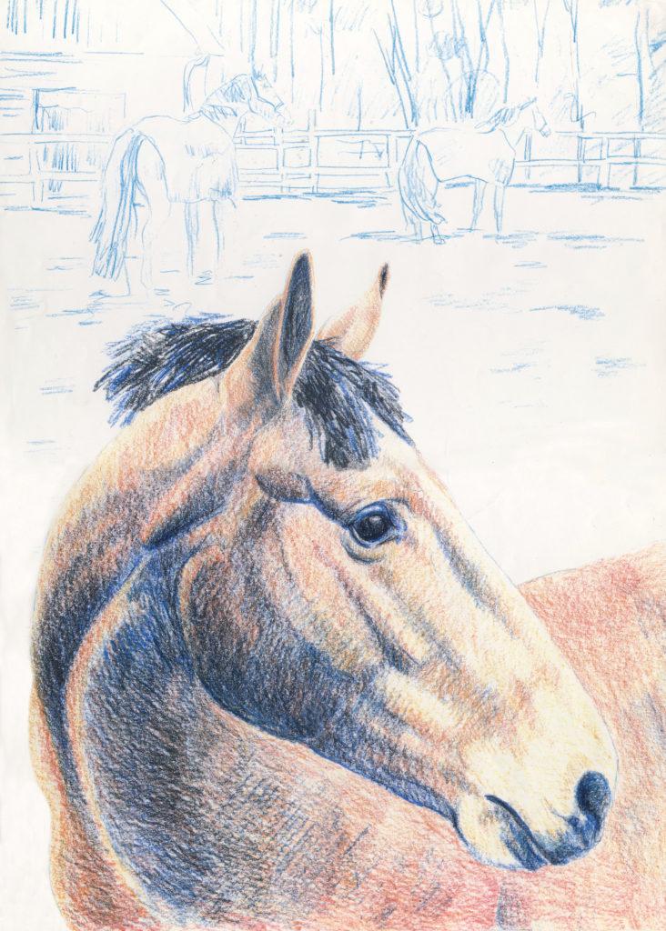 paard getekend in kleurpotlood door JWH